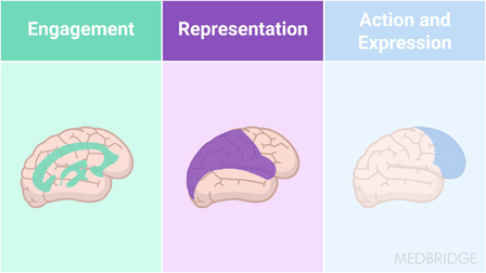 The Neuroscience of Learning: Universal Design for Learning