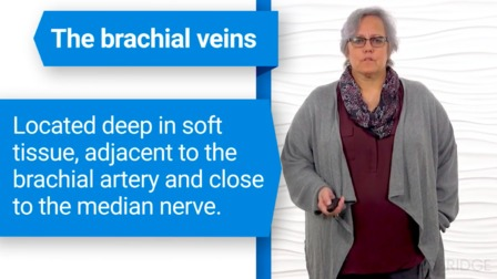 Overview of Intravenous Therapy for Nurses