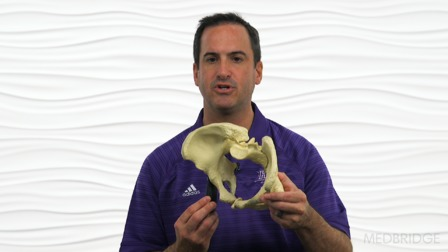 The Hip & Pelvis: A Global Systems Approach (Recorded Webinar)