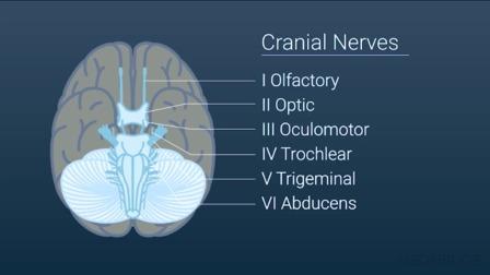 Neuroanatomy Part 1: The Brain