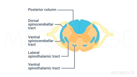 Neuroanatomy Part 2: The Spinal Cord