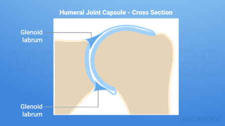 Understanding Glenohumeral Joint Biomechanics and Exercise Implementation