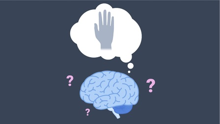 The Brain, Athletes, and Sports Performance