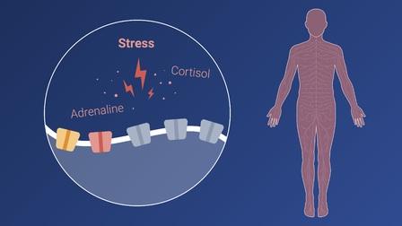The Neuroscience of Pain