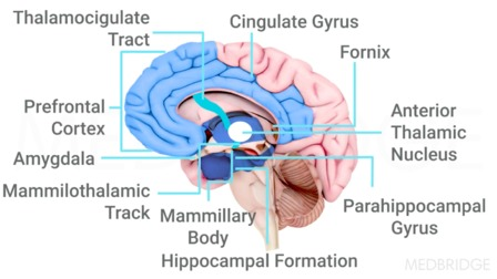 Cognitive Impairments: Memory, Screening, and Intervention