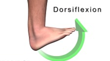 Normal Mechanics of the Foot and Lower Extremity