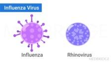 The Flu, Meningitis, and Pneumonia