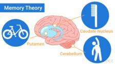 Memory Theory