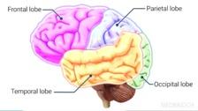 Neuroanatomy and Neuroimaging