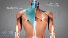 Thoracic Spine Pathology