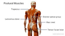 Enhancing Postural Stability and Its Role in Intervention Strategies