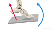 Positioning the Lower Extremities: Ankle and Foot
