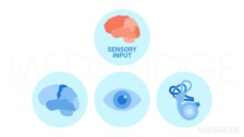 Assessment of Primary Sensory Systems:  Part A