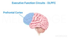 Executive Function Definition, Assessment, and Observation