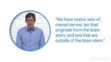 Brain Organization Part 1: Spinal Cord and Brain Stem