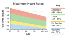 The Pathophysiology Of the Cardiovascular System Related to Aging