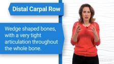 Carpal Anatomy and Arthrokinematics of the Wrist